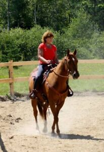 17 Year Old Gelding for Lease