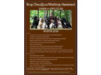 Dog Chauffeur / Assistant Walker