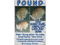 Found young ginger cat ls4