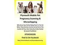 Pet scanning and microchipping