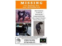 Dog Missing in Stalybridge since Nov 2016. REWARD OFFERED FOR SAFE RETURN