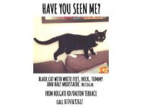 Missing cat, Holgate area, York, contact details on poster.