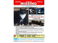 MISSING CAT LAST SEEN 2/6/2017 E16 SILVERTOWN