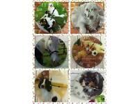 Personalised pet lovers clock