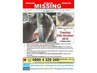 Still Missing, £800 reward. All grey female cat. Wishaw