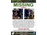 Missing dog called harvey
