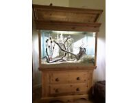 3ft x 2ft x 5ft aquarium made from pine and 10mm glass. Fitted with UV light