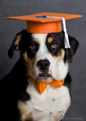 Dog Graduation Caps Set of Three