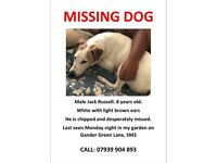 Missing Parsons Jack Russell