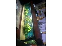 fish tank with a stand and everything in it and all equipment and fish and plants included