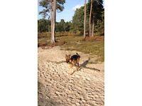 Dog Walker / Pet sitter / pet sitting / dog sitting / dog walking / dog walker west cliff