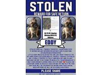 !!!stolen pug!!!!
