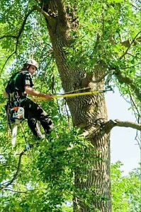 Gazon arbres services nettoyage goutti re dans laval for Forfait tonte pelouse