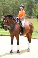 16.2-3hh 9yo TB Mare For Sale Guanaba Gold Coast West Preview