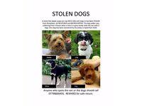 Four Dogs Stolen, one now found in Swanley Park, Dartford area - please help
