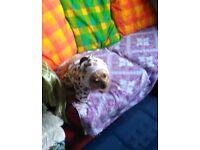 Fleece doggie playsuit/ jacket, small