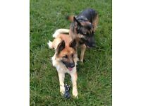 Dog sitter, walker and carer