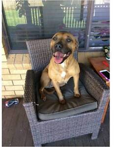 FOSTER OR ADOPT Delta - Pound Rescue Canberra City North Canberra Preview