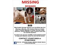 SID Male English Springer Spaniel Liver And White (Age: Adult) MISSING