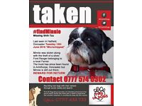 Lost missing stolen shih tzu