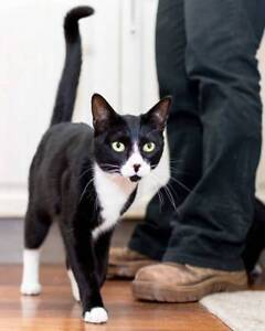 AK2189 : Typhon - CAT for ADOPTION - Vet Work Included