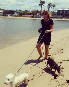 Pet Sitter and Dog Walker with Blue Card Mooloolaba Maroochydore Area Preview