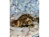 Small, really affectionate and friendly female tabby