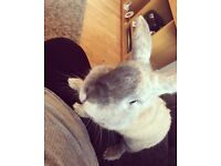 lovely rabbit looking for a new home