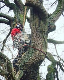 Ginkgo Tree Surgery Ltd. Fully Qualified & Insured 07934384501