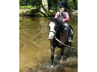 Shadow is looking for equestrian enthusiasts in Arborfield - Berks