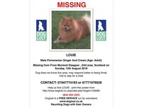 LOST GINGER / CREAM TAIL MALE POMERANIAN DOG CATHCART AREA