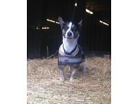 Looking for a Dog Walker in Edinburgh