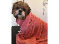 Buddys Dog Grooming & Microchipping