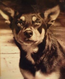Looking for a Freo house share for me and my kelpie! Fremantle Fremantle Area Preview