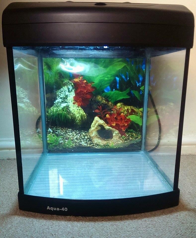 Fish tank in long melford suffolk gumtree for Fish tank ice method