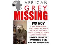 LOST AFRICAN GREY
