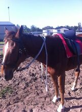 FOR SALE/SWAP 18 INCH DRESSAGE SADDLE Floraville Lake Macquarie Area Preview