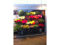 Florist Stand Business For Sale