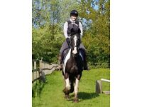Bow 15.1hh Cob mare for Part Loan in Arborfield - Berkshire