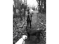Fully Insured Petsitter/Dog Walker