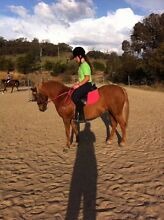 WANTED: Free lease horse/pony Forrestfield Kalamunda Area Preview
