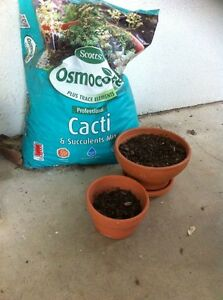Cacti succulent potting mix with small pots North Ward Townsville City Preview
