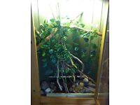 reptile vivarium corner unit unfinished project
