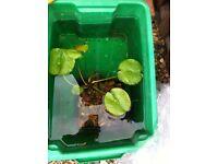 Pond fish and pond plants