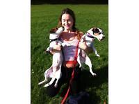 Dog Walking and Dog Sitting in Stoke Newington Area
