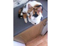 1 year old kitten/cat called Cuddles