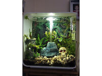 30 Litre White Biorb, Everything with it, including FISH