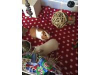 4x guinea pigs looking for a permanent home