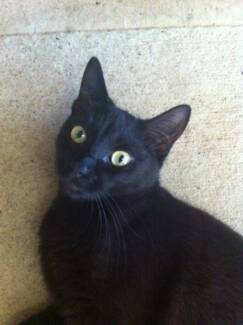 Black cat and Cat mum looking for a rental. Granville Parramatta Area Preview