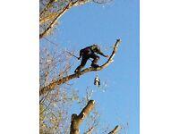 Tree surgeon - Badenoch area